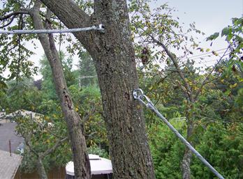 Закрепление аварийных деревьев